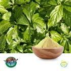 Gynostemma Leaf Extract 20% UV by Ningbo Herb
