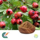 Hawthorn Berry Extract 5:1 (cGMP)