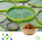 Lotus Leaf Extract  2% Nuciferine (Irradiated) by Shaanxi Undersun Biomedtech Co., Ltd
