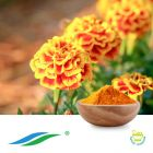 Marigold Extract 10%-80% Lutein HPLC by Hunan NutraMax Inc.