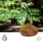 Moringa Oleifera Extract 20% Saponin