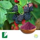 Mulberry Extract 5% Anthocyanidins by Longze Biotechnology