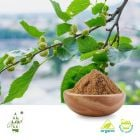 Organic Mulberry Leaf Extract 4:1
