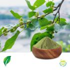 Mulberry Leaf Extract 5:1