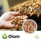 Natural Diced Almonds 12/08 by Olam