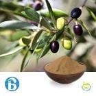 Olive Leaf P.E. 20% Oleuropein (cGMP)