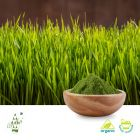 Organic Barley Grass Powder (BRC certified factory) by Qimei Organic