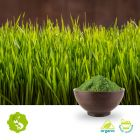 Organic Wheat Grass Powder by Hunan Essence