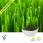 Organic Barley Grass Powder by Us Greens