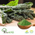 Organic Kale Powder by YesHerb