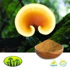Organic Reishi Powder by Biosan
