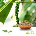 Green Peppercorn Whole Organic by American Botanicals