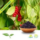 Schisandra Berry Whole Org by American Botanicals