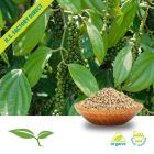 White Pepper (Whole, Organic) by American Botanicals
