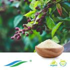 Organic Sweet Tea Leaf Extract 70% Rubusoside HPLC by Hunan NutraMax Inc.