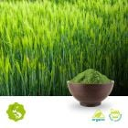 Organic Barley Grass Powder by Hunan Essence