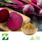 Organic Beet Root Extract 4:1