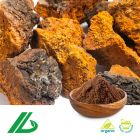 Organic Chaga Extract 30% Polysaccharide