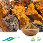 Organic Chaga Mushroom Extract by Hunan NutraMax