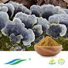 Organic Coriolus Mushroom Extract by Hunan NutraMax Inc.