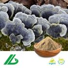 Organic Coriolus Versicolor Extract 30% Polysaccharide