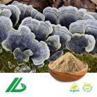 Organic Coriolus Versicolor Extract 30% Beta Gluca