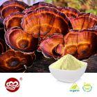 Organic Ganoderma Lucidum Extract Powder Grade A