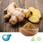 Organic Ginger Root Powder by Tianjiang