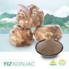 Organic Konjac Gum (YZ-T-15) (Glucomannan 65%)