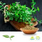 Oregano (Extra Fancy, Cut and Sift) by American Botanicals