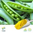 Pea Protein Isolate 80% (Organic) by Yosin Biotechnology(Yantai)Co.,Ltd.