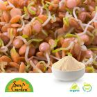 Organic Red Lentil Sprout Powder by SunGarden