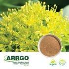 Organic Rhodiola Rosea Root (0.6-0.8% Rosavins) (Milled) by ARRGO