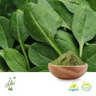Organic Spinach Powder  (BRC Certified Factory) by Qimei Industrial Group