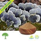 Organic Trametes Versicolor (Turkey Tail)
