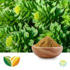 Rhodiola P.E. 1% Salidroside by Tianhua Pharmaceutical