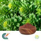 Rhodiola crenulata Extract 5% Salidroside (cGMP)