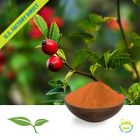 Rosehips Powder