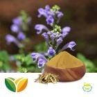 Scutellaria Baicalensis Powder by Shandong Tianhua Pharmaceutical Co., Ltd.