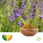 Scutellaria Baicalensis P.E 30% by Tianhua Pharmaceutical