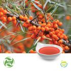 Sea Buckthorn Fruit Oil