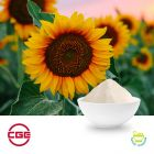 Sunflower Oil Powder (Sodium Caseinate) by CGE Healthcare