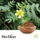 Tribulus Terrestris P.E. 40% Saponins by Herbion Naturals