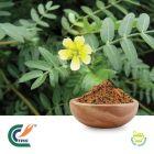 Tribulus P.E 60% Saponins by Hanzhong Trg Bioctech Co., Ltd.