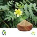 Tribulus Terrestris Powder steam treated by S.A. Herbal Bioactives LLP