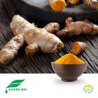 Turmeric Root Extract 95% Curcuminoids HPLC