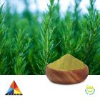 Ursolic Acid 35% Powder