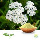Yarrow Flower Powder by American Botanicals