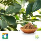 Yerba Mate Extract 8% Caffeine (UV) by Monteloeder