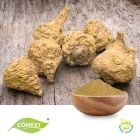 Maca Root Extract 10:1 by Comext